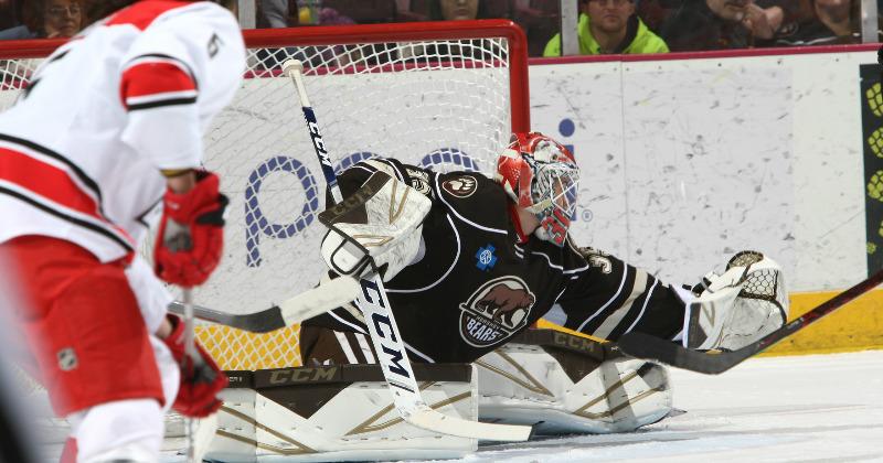 Samsonov Shines, Bears Sweep Checkers